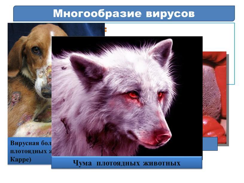 Многообразие вирусов Болезни животных: