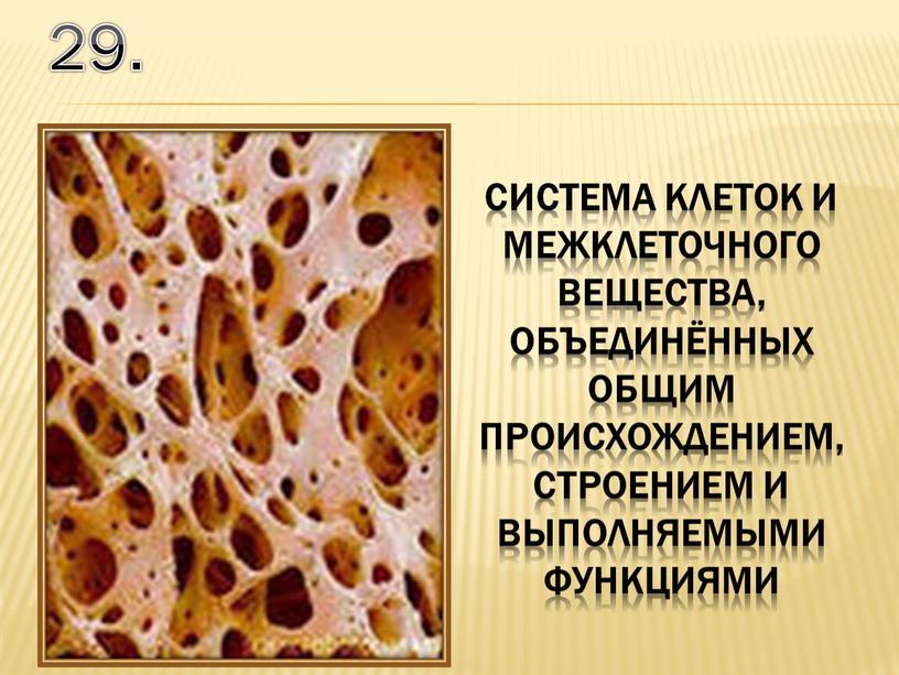 29. система клеток и межклеточного вещества, объединённых общим происхождением, строением и выполняемыми функциями