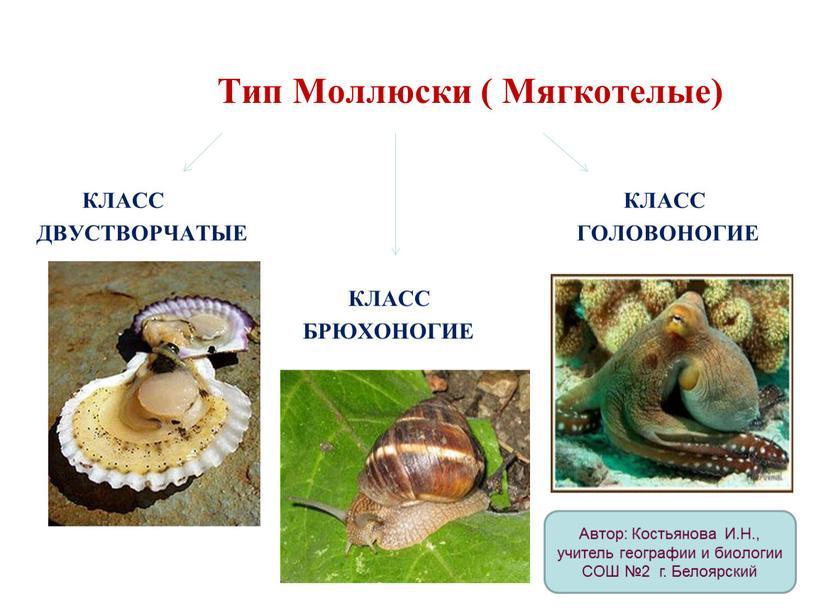 Тип Моллюски ( Мягкотелые)