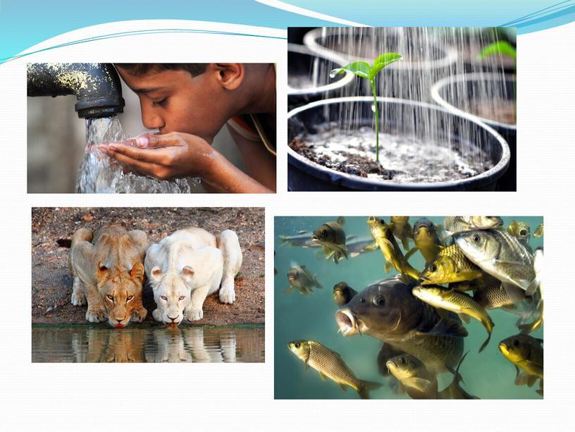 """Презентация к уроку окружающего мира  во 2 классе на тему: """"И про воду""""."""