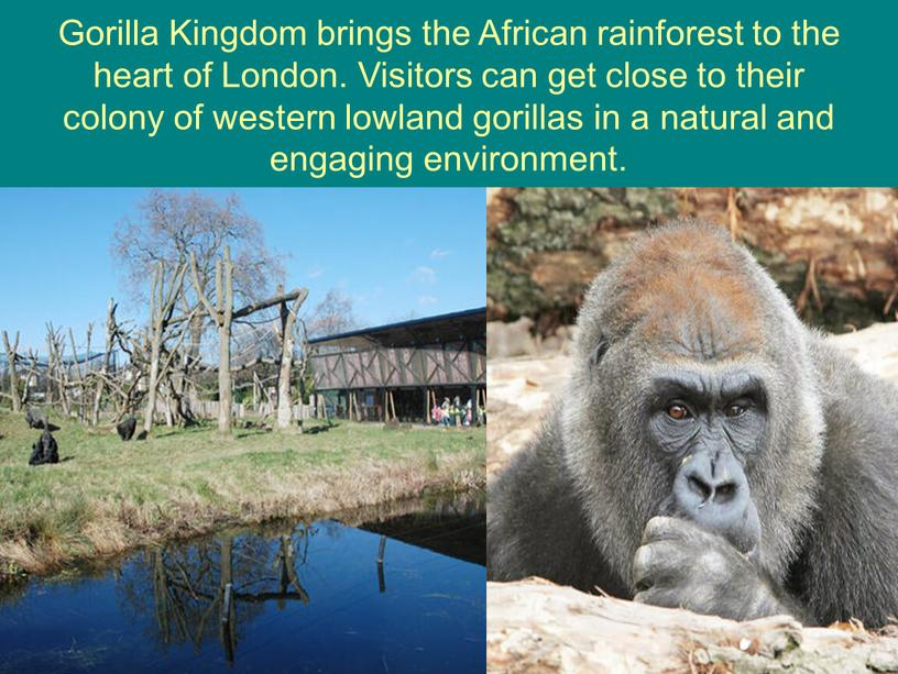 Gorilla Kingdom brings the African rainforest to the heart of