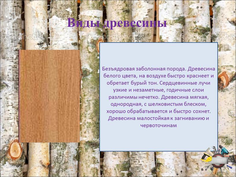 Виды древесины Безъядровая заболонная порода