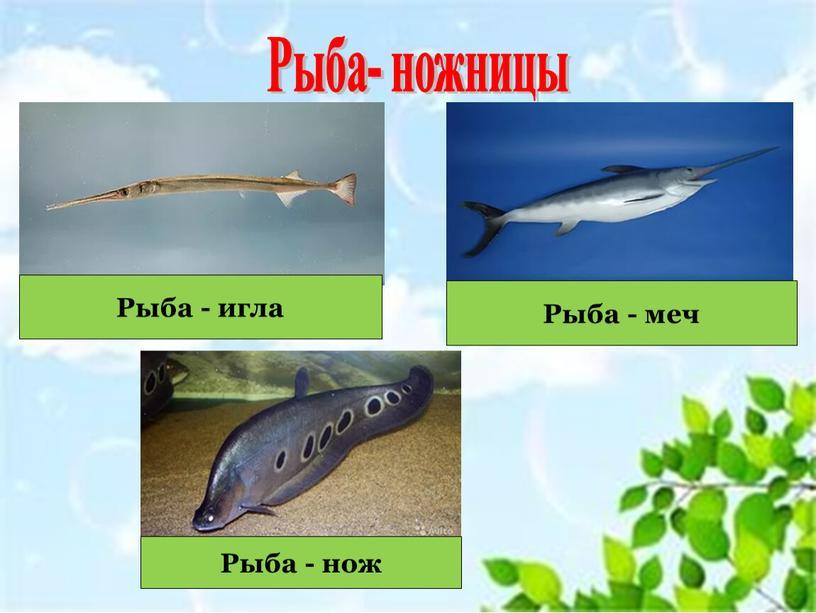 Рыба- ножницы Рыба - игла Рыба - меч