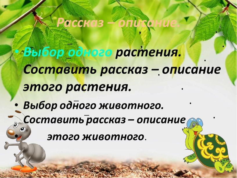 Рассказ – описание. Выбор одного растения