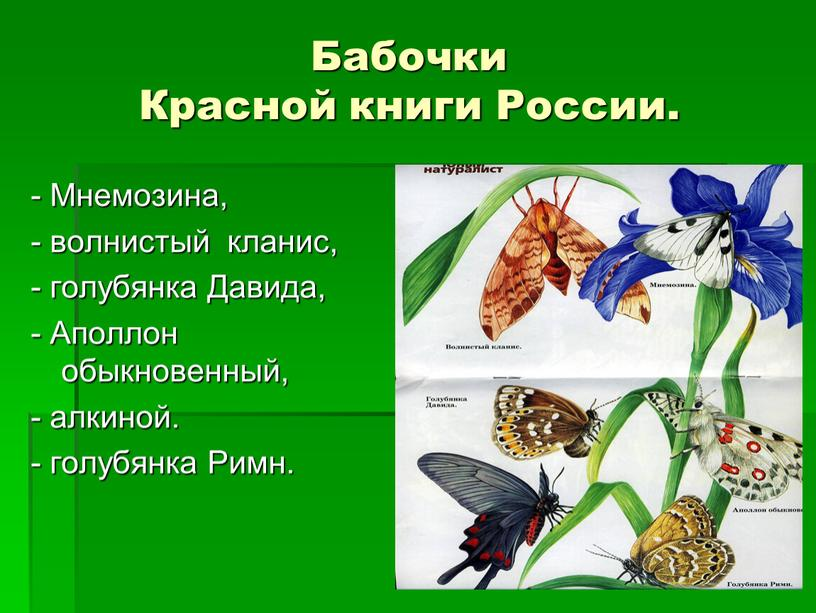 Бабочки Красной книги России. -