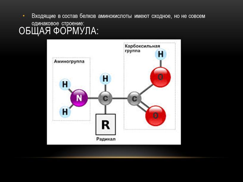 Общая формула: Входящие в состав белков аминокислоты имеют сходное, но не совсем одинаковое строение: