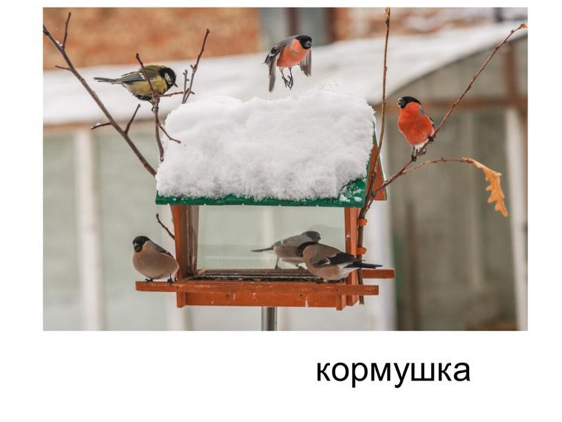 Всякая здесь может птица В зимний холод угоститься
