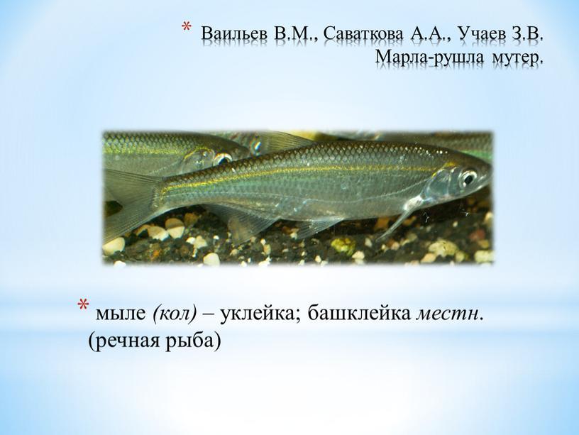 Ваильев В.М., Саваткова А.А., Учаев