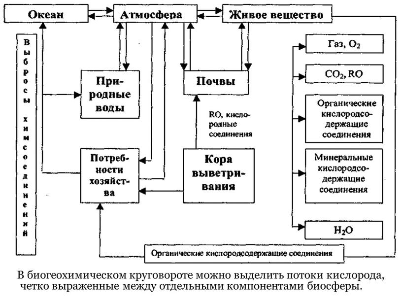 В биогеохимическом круговороте можно выделить потоки кислорода, четко выраженные между отдельными компонентами биосферы