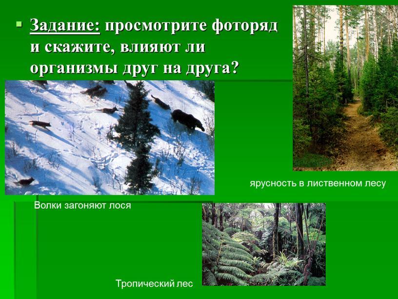 Задание: просмотрите фоторяд и скажите, влияют ли организмы друг на друга?