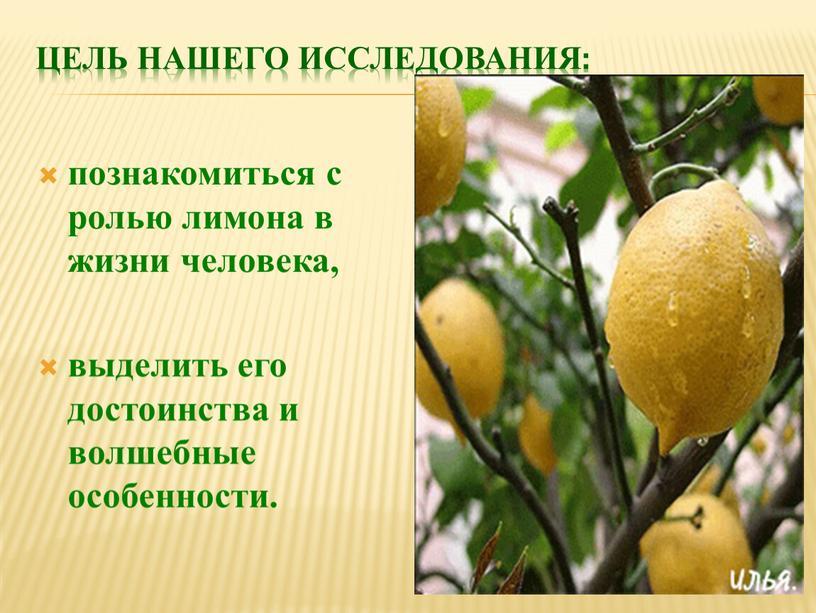 Цель нашего исследования: познакомиться с ролью лимона в жизни человека, выделить его достоинства и волшебные особенности