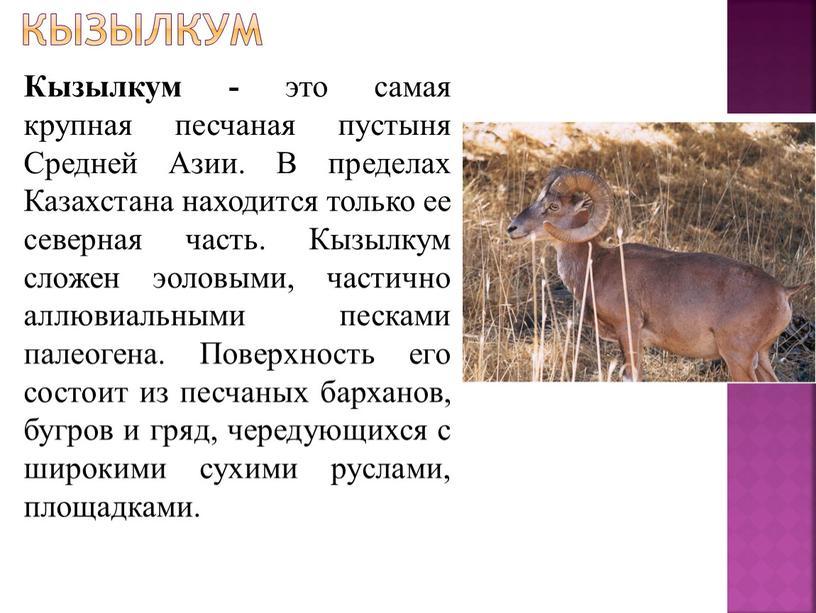 Кызылкум Кызылкум - это самая крупная песчаная пустыня
