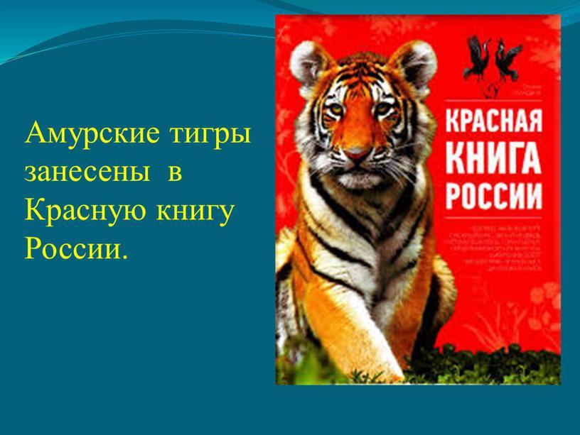 Амурские тигры занесены в Красную книгу