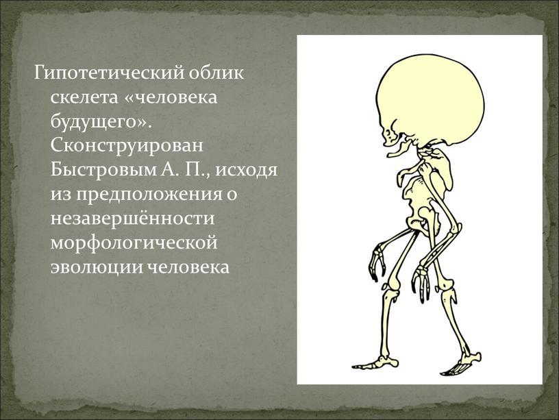 Гипотетический облик скелета «человека будущего»
