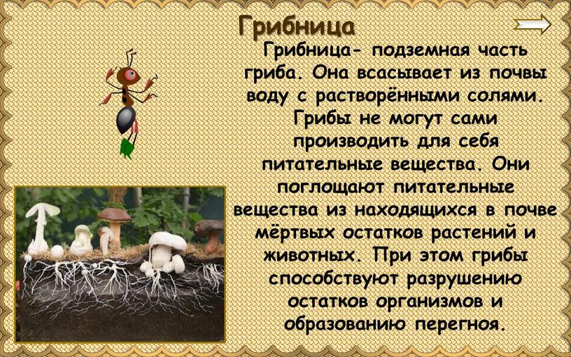 Грибница- подземная часть гриба
