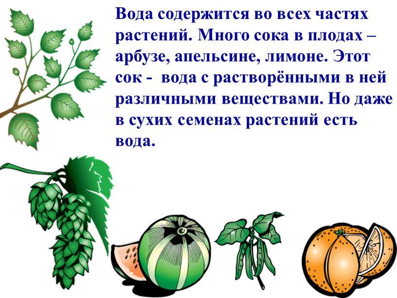 Вода содержится во всех частях растений