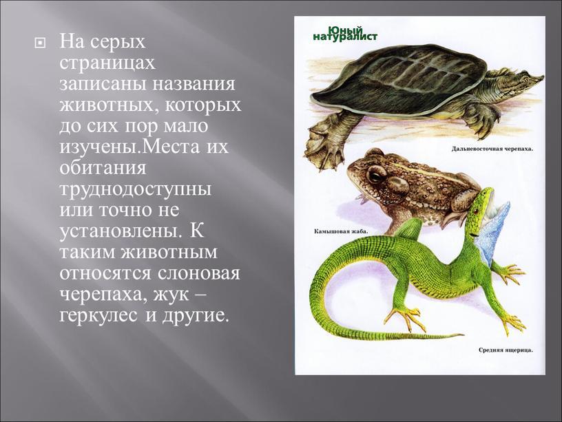 На серых страницах записаны названия животных, которых до сих пор мало изучены