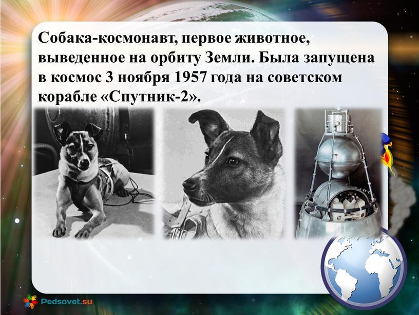 Собака-космонавт, первое животное, выведенное на орбиту