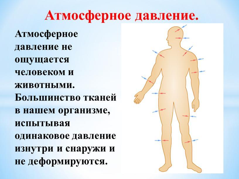 Атмосферное давление. Атмосферное давление не ощущается человеком и животными