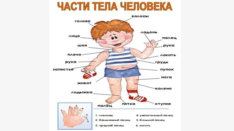 Части тела-2 класс  для азербайджанской школы