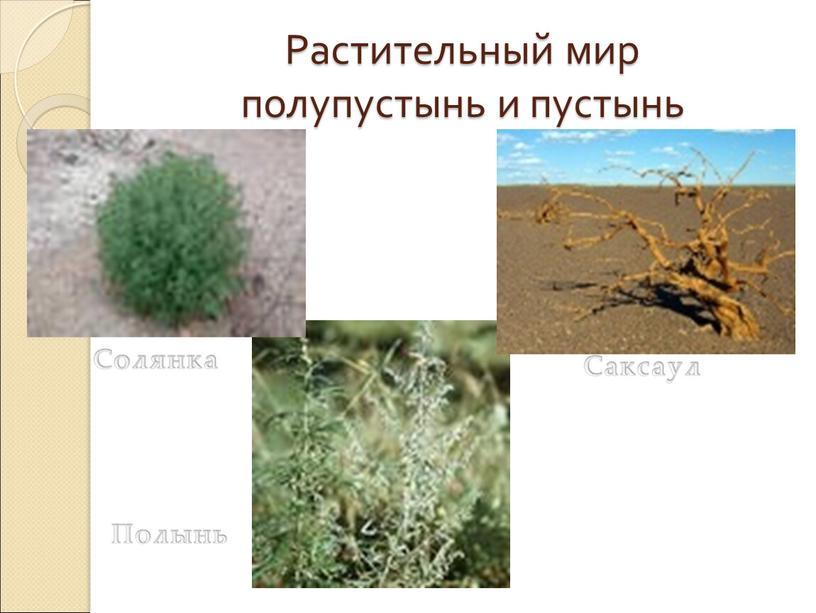 Растительный мир полупустынь и пустынь
