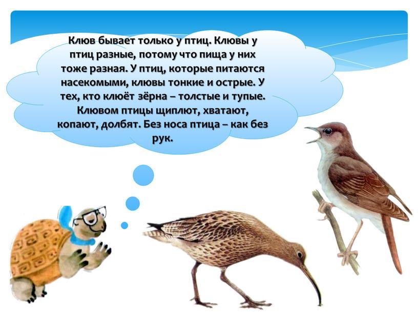 Клюв бывает только у птиц. Клювы у птиц разные, потому что пища у них тоже разная