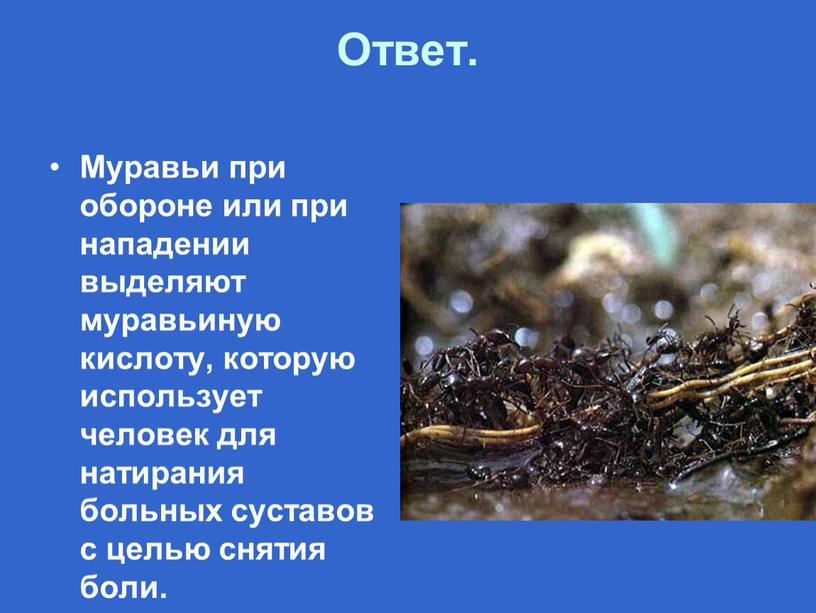 Ответ. Муравьи при обороне или при нападении выделяют муравьиную кислоту, которую использует человек для натирания больных суставов с целью снятия боли