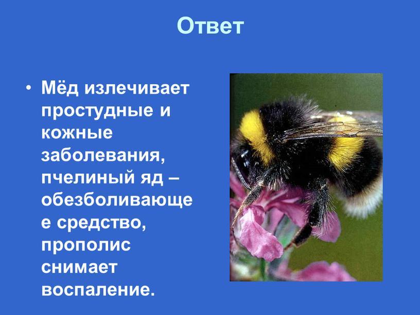 Ответ Мёд излечивает простудные и кожные заболевания, пчелиный яд – обезболивающее средство, прополис снимает воспаление