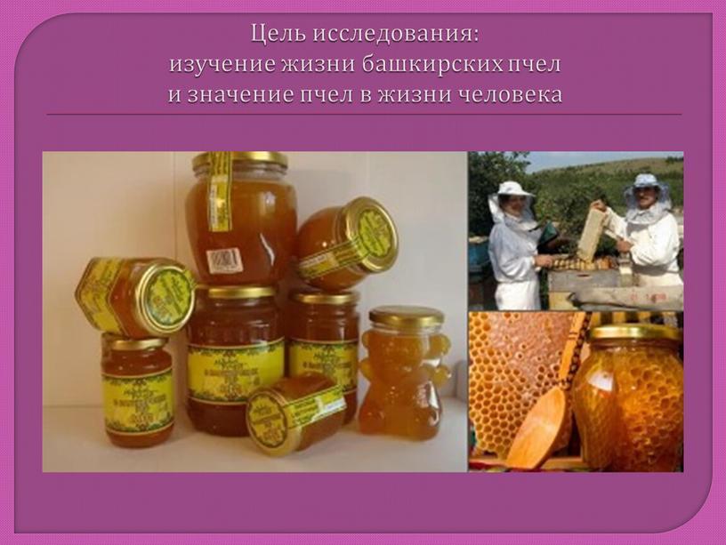 Цель исследования: изучение жизни башкирских пчел и значение пчел в жизни человека