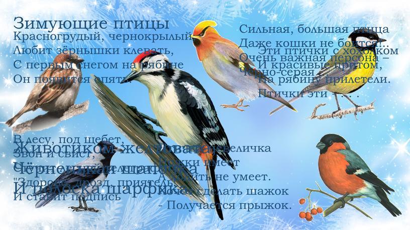 Зимующие птицы Животиком желтовата,