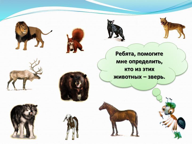 Ребята, помогите мне определить, кто из этих животных – зверь