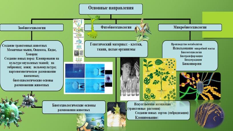 "Презентация по теме ""Селекция микроорганизмов. Биотехнология"" 9 класс."