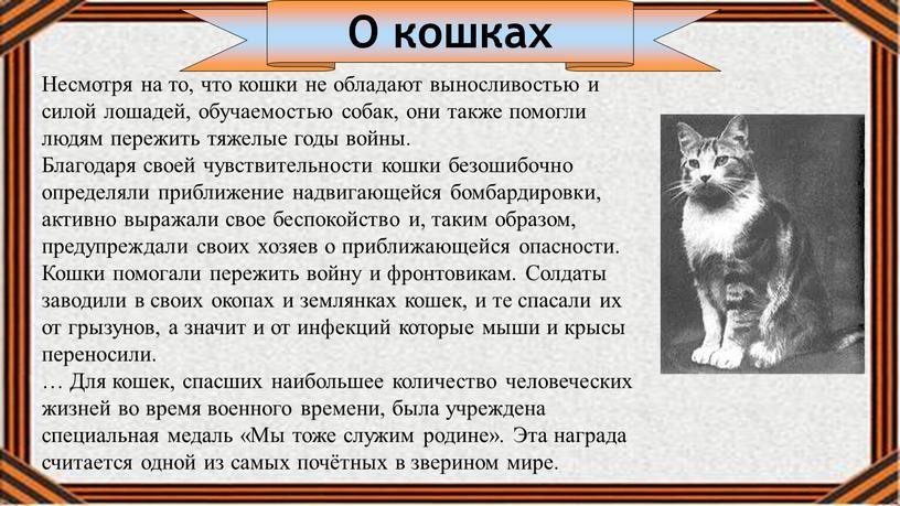 О кошках Несмотря на то, что кошки не обладают выносливостью и силой лошадей, обучаемостью собак, они также помогли людям пережить тяжелые годы войны