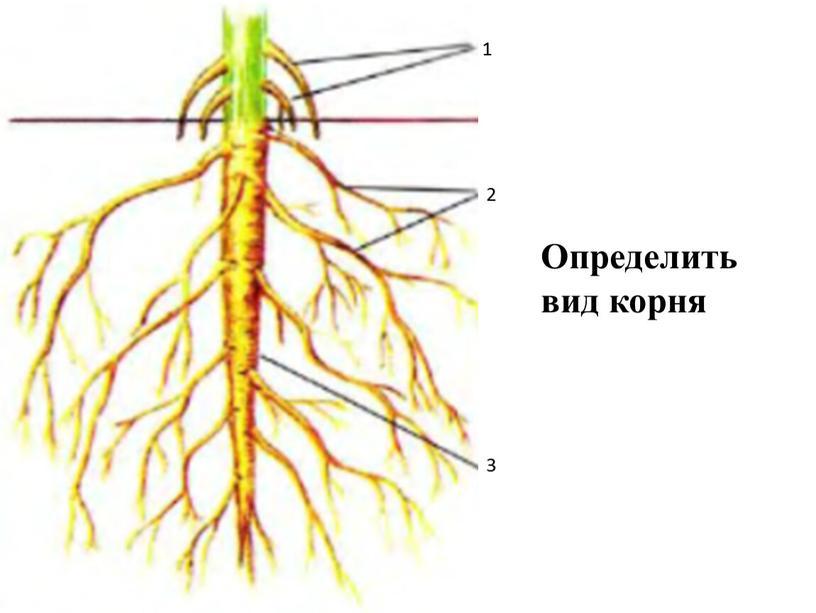 1 2 3 Определить вид корня