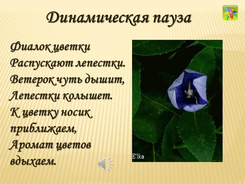 Фиалок цветки Распускают лепестки