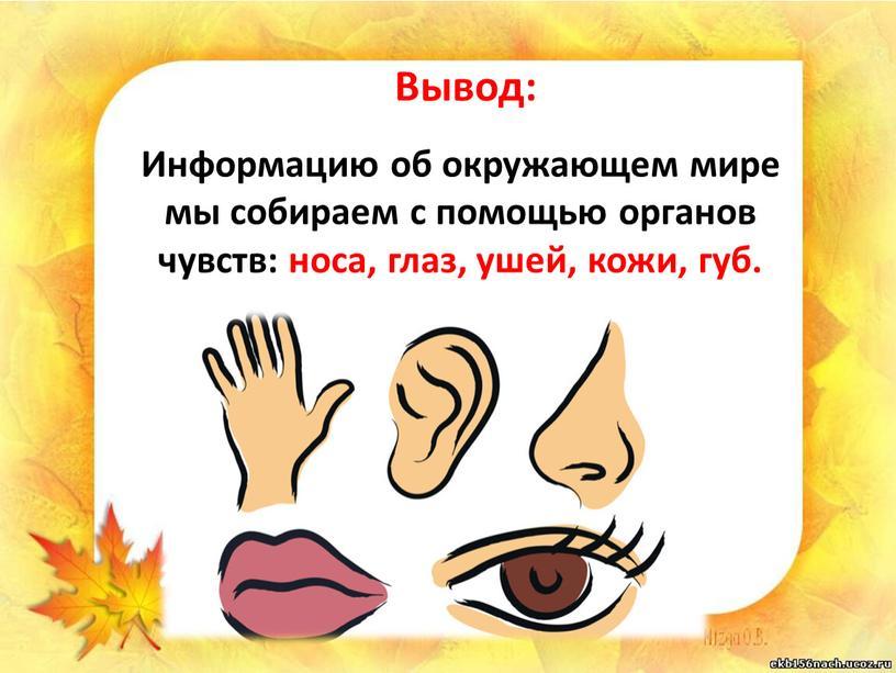 Вывод: Информацию об окружающем мире мы собираем с помощью органов чувств: носа, глаз, ушей, кожи, губ
