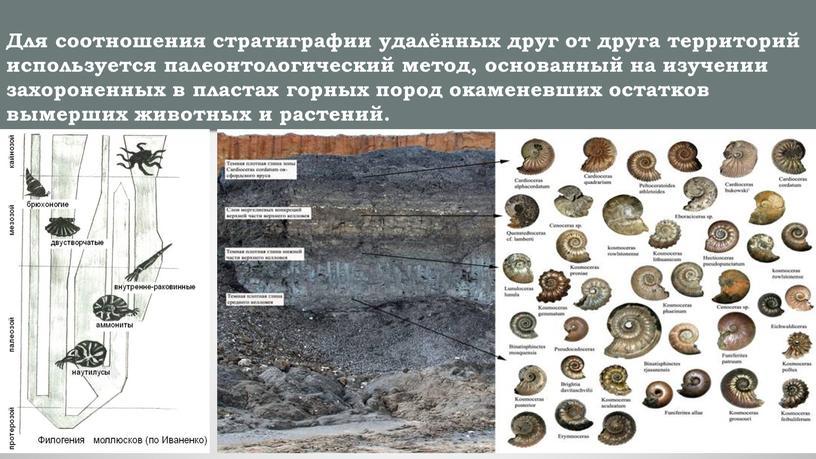 Для соотношения стратиграфии удалённых друг от друга территорий используется палеонтологический метод, основанный на изучении захороненных в пластах горных пород окаменевших остатков вымерших животных и растений