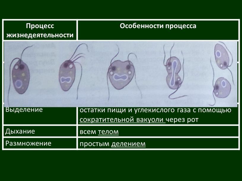 Процесс жизнедеятельности Особенности процесса