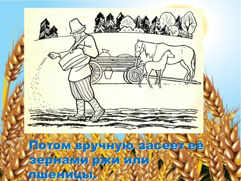 Потом вручную засеет её зернами ржи или пшеницы