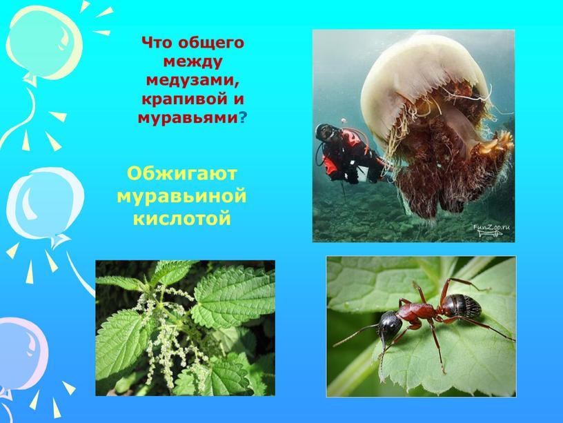 Что общего между медузами, крапивой и муравьями?