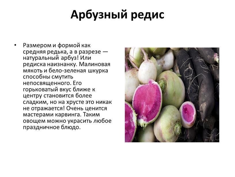 Арбузный редис Размером и формой как средняя редька, а в разрезе — натуральный арбуз!