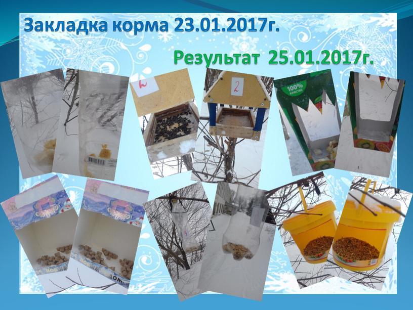 Закладка корма 23.01.2017г.