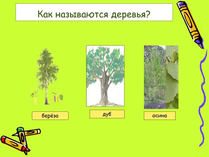 Как называются деревья? берёза дуб осина