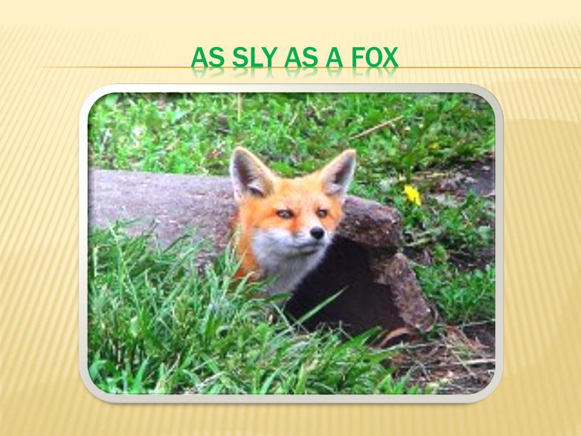 As sly as a fox
