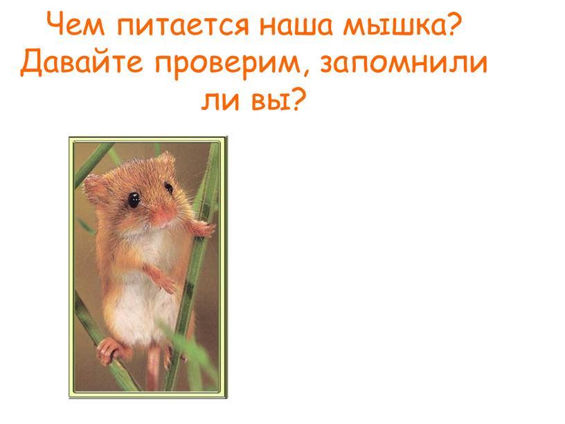 Чем питается наша мышка? Давайте проверим, запомнили ли вы?