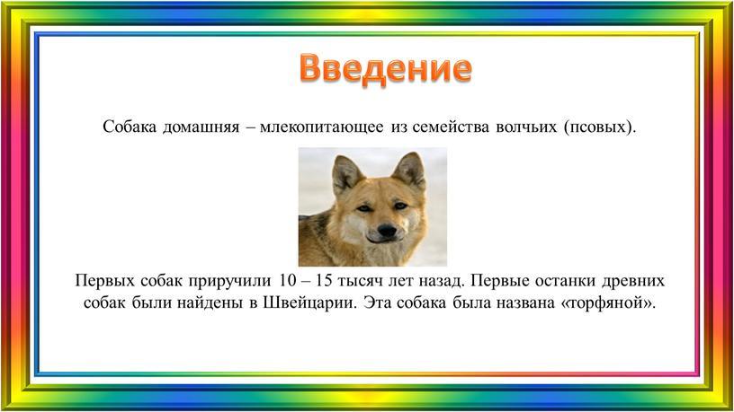 Введение Собака домашняя – млекопитающее из семейства волчьих (псовых)