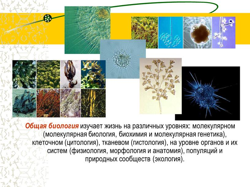 Общая биология изучает жизнь на различных уровнях: молекулярном (молекулярная биология, биохимия и молекулярная генетика), клеточном (цитология), тканевом (гистология), на уровне органов и их систем (физиология,…