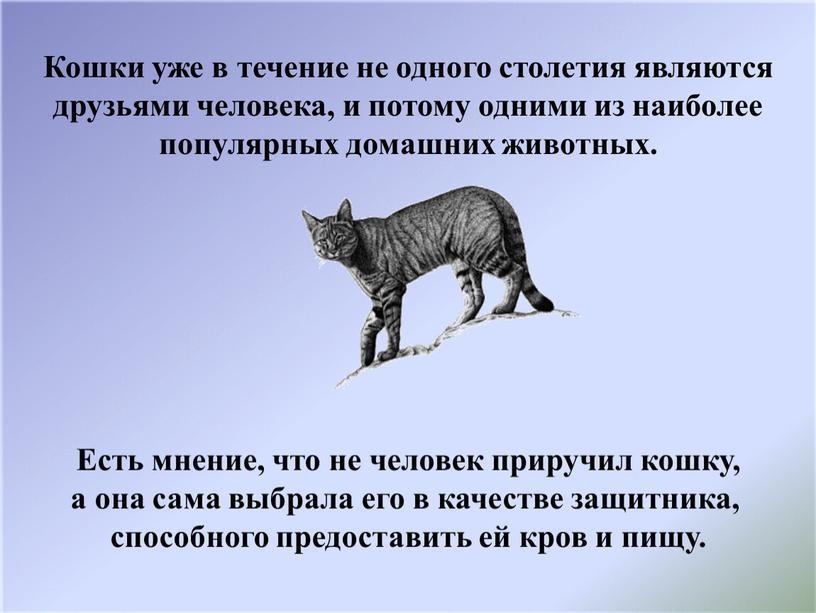 Кошки уже в течение не одного столетия являются друзьями человека, и потому одними из наиболее популярных домашних животных