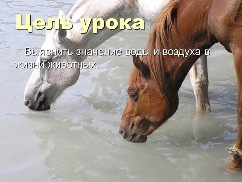 Цель урока Выяснить значение воды и воздуха в жизни животных