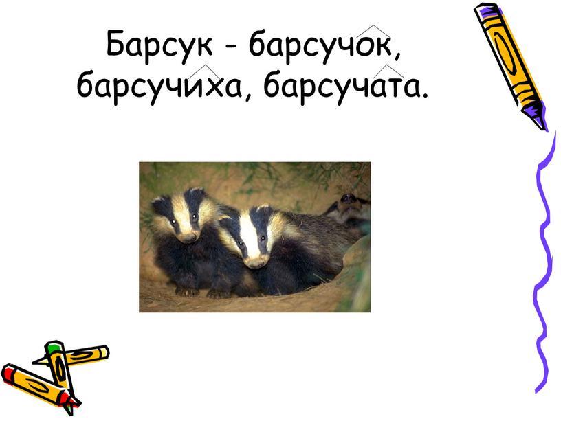 Барсук - барсучок, барсучиха, барсучата